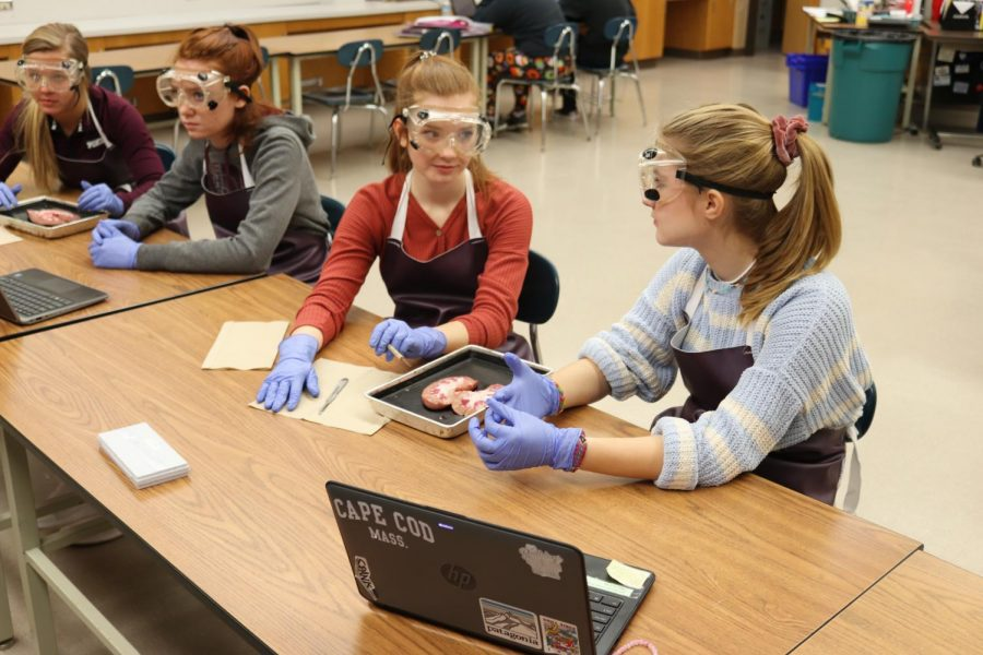 Vanessa Riese and Grace Marocco dissect kidney's in Mrs. Alletto's Biomedical Innovation class.
